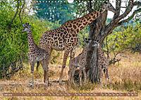 Wildlife Sambia (Wandkalender 2019 DIN A3 quer) - Produktdetailbild 7