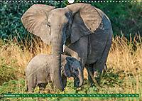 Wildlife Sambia (Wandkalender 2019 DIN A3 quer) - Produktdetailbild 11