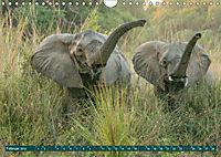 Wildlife Sambia (Wandkalender 2019 DIN A4 quer) - Produktdetailbild 2