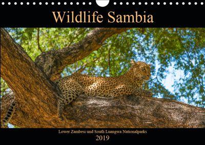 Wildlife Sambia (Wandkalender 2019 DIN A4 quer), Photo4emotion.com