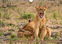 Wildlife Sambia (Wandkalender 2019 DIN A4 quer) - Produktdetailbild 1