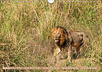 Wildlife Sambia (Wandkalender 2019 DIN A4 quer) - Produktdetailbild 3