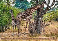 Wildlife Sambia (Wandkalender 2019 DIN A4 quer) - Produktdetailbild 7