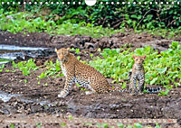 Wildlife Sambia (Wandkalender 2019 DIN A4 quer) - Produktdetailbild 9