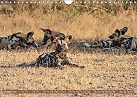 Wildlife Sambia (Wandkalender 2019 DIN A4 quer) - Produktdetailbild 10
