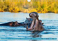 Wildlife Sambia (Wandkalender 2019 DIN A4 quer) - Produktdetailbild 12