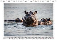 Wildlife - Tiere in Namibia (Tischkalender 2019 DIN A5 quer) - Produktdetailbild 7