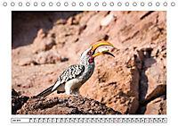 Wildlife - Tiere in Namibia (Tischkalender 2019 DIN A5 quer) - Produktdetailbild 12