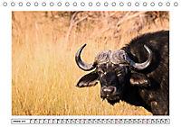 Wildlife - Tiere in Namibia (Tischkalender 2019 DIN A5 quer) - Produktdetailbild 10