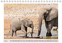 Wildlife - Tiere in Namibia (Tischkalender 2019 DIN A5 quer) - Produktdetailbild 6