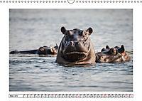 Wildlife - Tiere in Namibia (Wandkalender 2019 DIN A3 quer) - Produktdetailbild 3