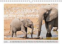 Wildlife - Tiere in Namibia (Wandkalender 2019 DIN A4 quer) - Produktdetailbild 6