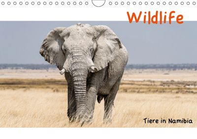 Wildlife - Tiere in Namibia (Wandkalender 2019 DIN A4 quer), Matthias Kunert