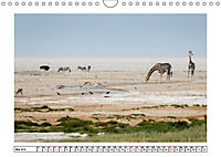 Wildlife - Tiere in Namibia (Wandkalender 2019 DIN A4 quer) - Produktdetailbild 5