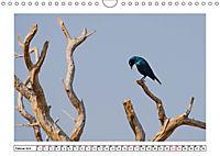 Wildlife - Tiere in Namibia (Wandkalender 2019 DIN A4 quer) - Produktdetailbild 2