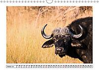 Wildlife - Tiere in Namibia (Wandkalender 2019 DIN A4 quer) - Produktdetailbild 10