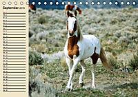 Wildpferde. Frei wie der Wind (Tischkalender 2019 DIN A5 quer) - Produktdetailbild 9