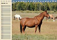 Wildpferde. Frei wie der Wind (Tischkalender 2019 DIN A5 quer) - Produktdetailbild 1