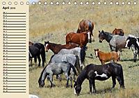 Wildpferde. Frei wie der Wind (Tischkalender 2019 DIN A5 quer) - Produktdetailbild 4
