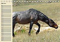 Wildpferde. Frei wie der Wind (Tischkalender 2019 DIN A5 quer) - Produktdetailbild 7