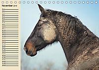 Wildpferde. Frei wie der Wind (Tischkalender 2019 DIN A5 quer) - Produktdetailbild 11