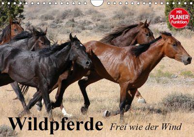 Wildpferde. Frei wie der Wind (Wandkalender 2019 DIN A4 quer), Elisabeth Stanzer