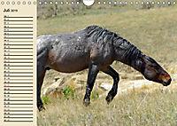 Wildpferde. Frei wie der Wind (Wandkalender 2019 DIN A4 quer) - Produktdetailbild 7