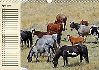 Wildpferde. Frei wie der Wind (Wandkalender 2019 DIN A4 quer) - Produktdetailbild 4