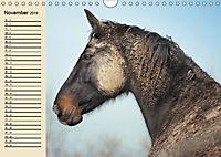 Wildpferde. Frei wie der Wind (Wandkalender 2019 DIN A4 quer) - Produktdetailbild 11