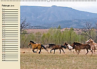 Wildpferde. Frei wie der Wind (Wandkalender 2019 DIN A2 quer) - Produktdetailbild 2