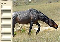 Wildpferde. Frei wie der Wind (Wandkalender 2019 DIN A2 quer) - Produktdetailbild 7