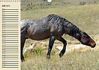 Wildpferde. Frei wie der Wind (Wandkalender 2019 DIN A3 quer) - Produktdetailbild 7