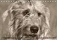Windhunde eye-catcher (Tischkalender 2019 DIN A5 quer) - Produktdetailbild 5