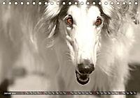 Windhunde eye-catcher (Tischkalender 2019 DIN A5 quer) - Produktdetailbild 1