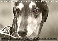 Windhunde eye-catcher (Tischkalender 2019 DIN A5 quer) - Produktdetailbild 3