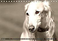 Windhunde eye-catcher (Tischkalender 2019 DIN A5 quer) - Produktdetailbild 6
