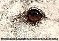 Windhunde eye-catcher (Tischkalender 2019 DIN A5 quer) - Produktdetailbild 8