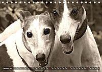 Windhunde eye-catcher (Tischkalender 2019 DIN A5 quer) - Produktdetailbild 10