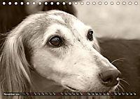 Windhunde eye-catcher (Tischkalender 2019 DIN A5 quer) - Produktdetailbild 11
