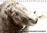 Windhunde eye-catcher (Tischkalender 2019 DIN A5 quer) - Produktdetailbild 4