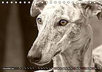 Windhunde eye-catcher (Tischkalender 2019 DIN A5 quer) - Produktdetailbild 12