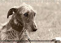 Windhunde eye-catcher (Tischkalender 2019 DIN A5 quer) - Produktdetailbild 2