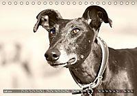 Windhunde eye-catcher (Tischkalender 2019 DIN A5 quer) - Produktdetailbild 7