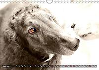 Windhunde eye-catcher (Wandkalender 2019 DIN A4 quer) - Produktdetailbild 4