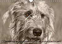 Windhunde eye-catcher (Wandkalender 2019 DIN A4 quer) - Produktdetailbild 5