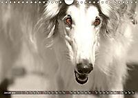Windhunde eye-catcher (Wandkalender 2019 DIN A4 quer) - Produktdetailbild 1