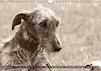Windhunde eye-catcher (Wandkalender 2019 DIN A4 quer) - Produktdetailbild 2