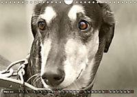 Windhunde eye-catcher (Wandkalender 2019 DIN A4 quer) - Produktdetailbild 3