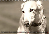 Windhunde eye-catcher (Wandkalender 2019 DIN A4 quer) - Produktdetailbild 6
