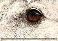 Windhunde eye-catcher (Wandkalender 2019 DIN A4 quer) - Produktdetailbild 8